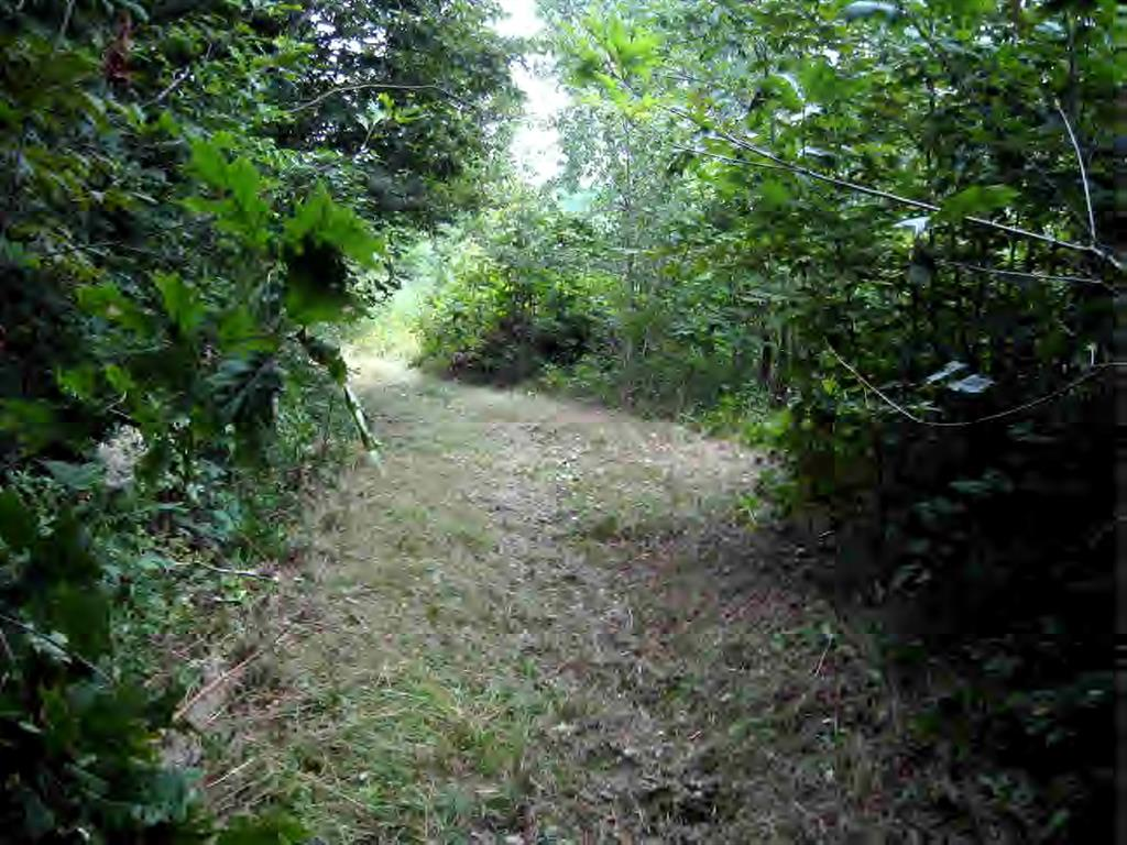 30481 Peaceful Court None Property Photo