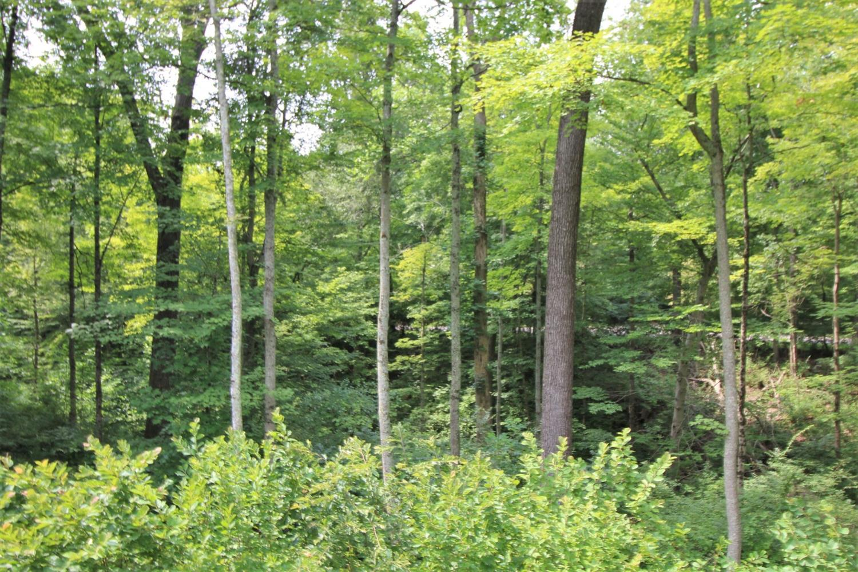 9550 Tall Trail Property Photo 42