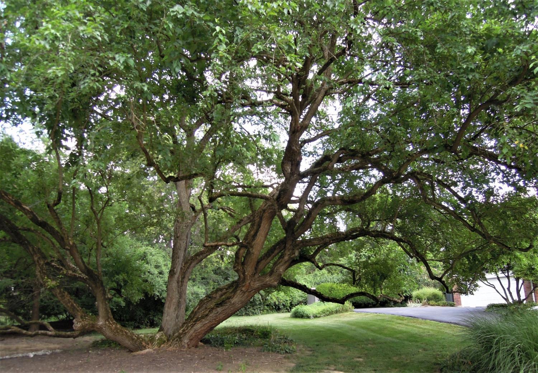 328 Oak Drive Property Photo 36