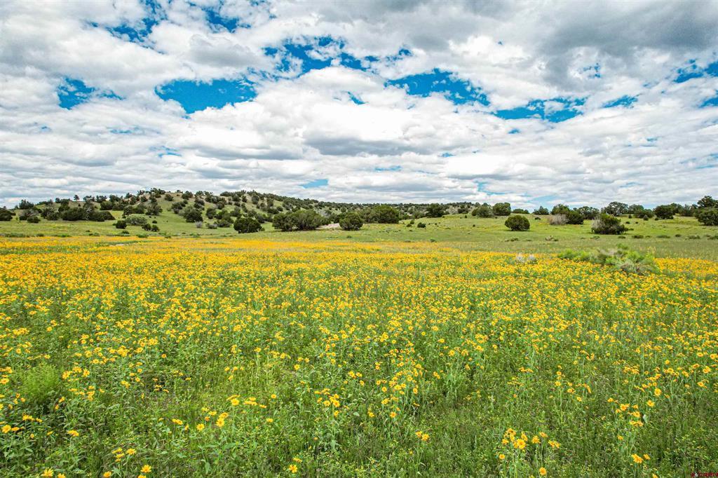 Tba Us Highway 60 Property Photo