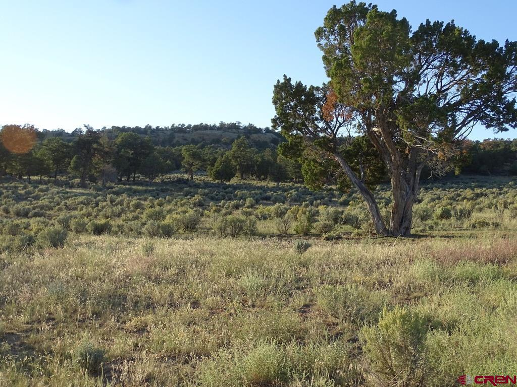 Tbd Highway 537 Property Photo