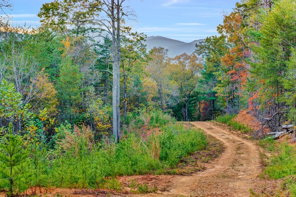 1 Celie Ann Seabolt Property Photo 1
