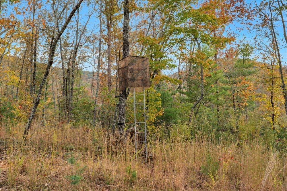 1 Celie Ann Seabolt Property Photo 16