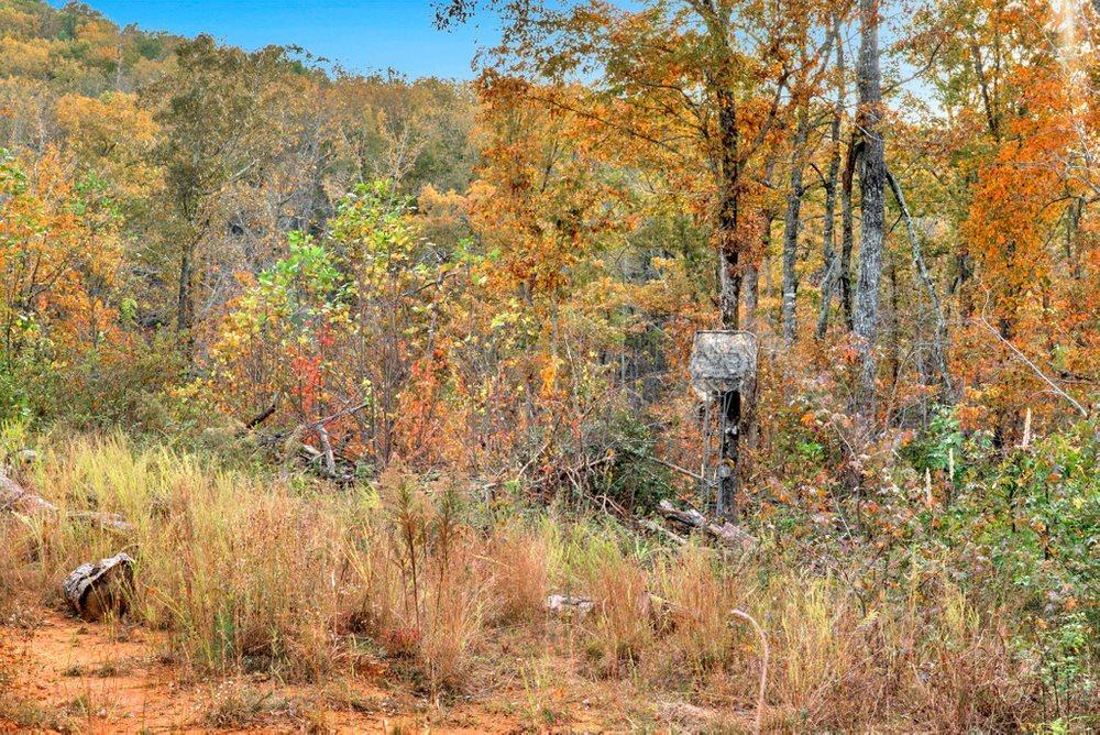 1 Celie Ann Seabolt Property Photo 17