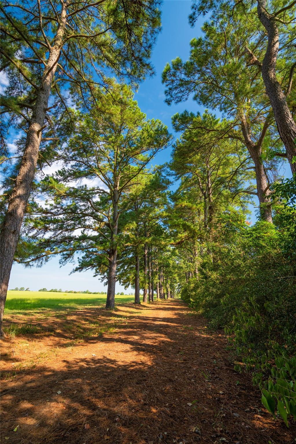 19204 Fm 359 Road Property Photo 29