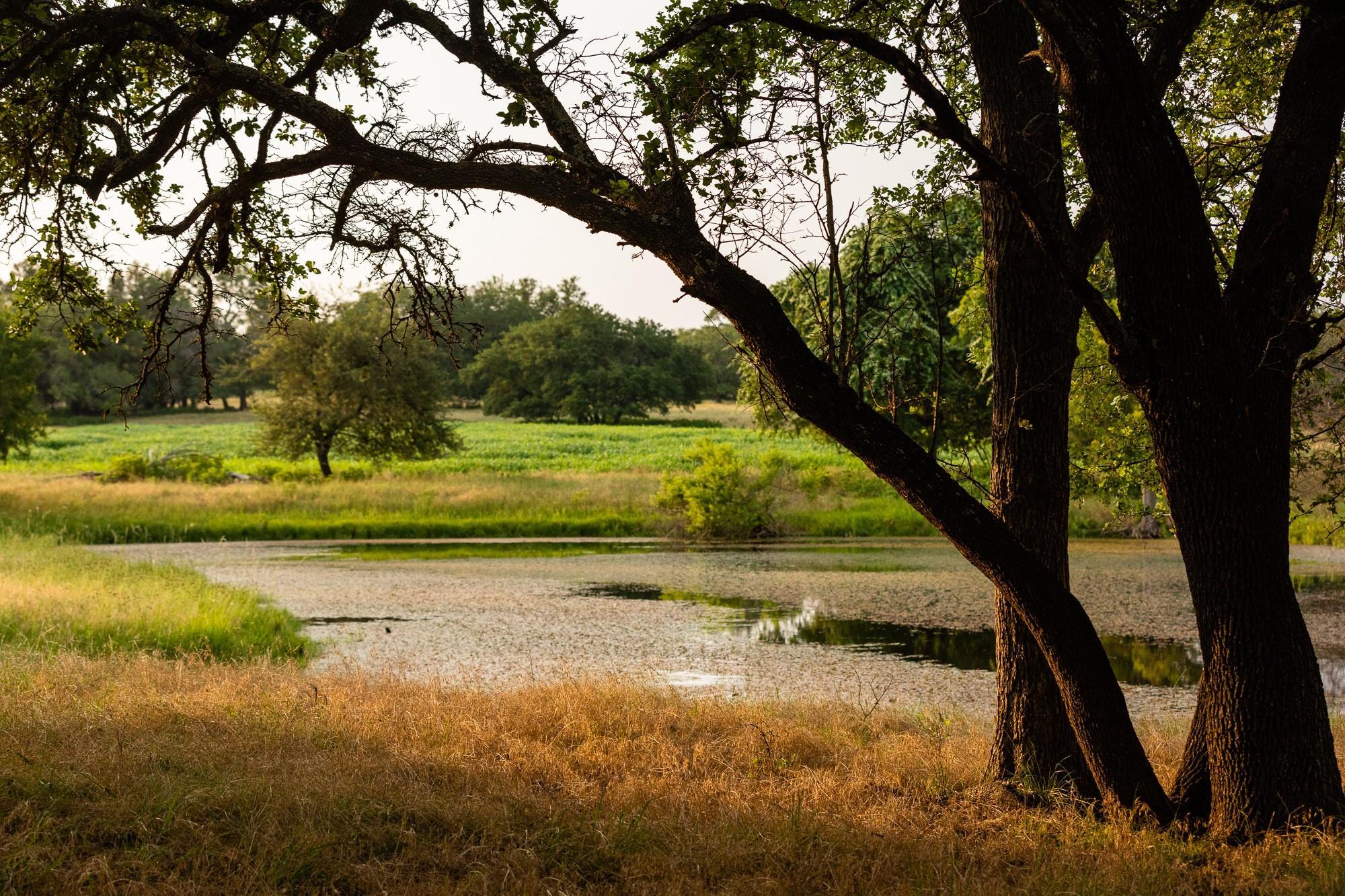 9420 Fm 2843 Property Photo 42