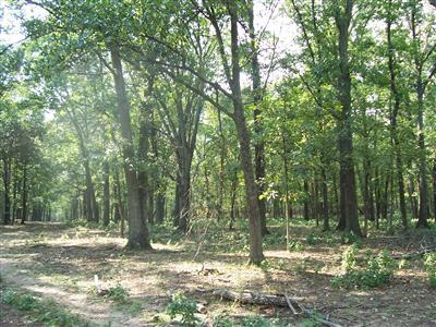 0 Hunt Road Property Photo 7