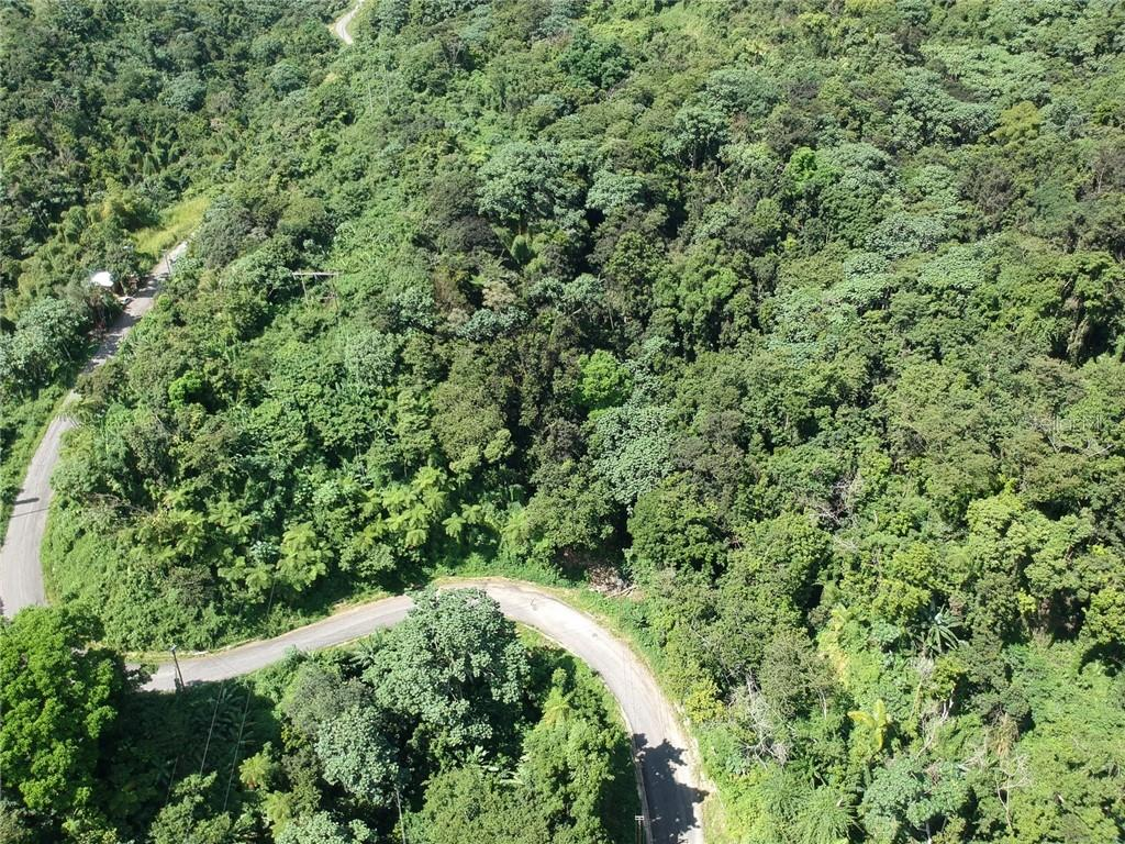 Ciales County Real Estate Listings Main Image