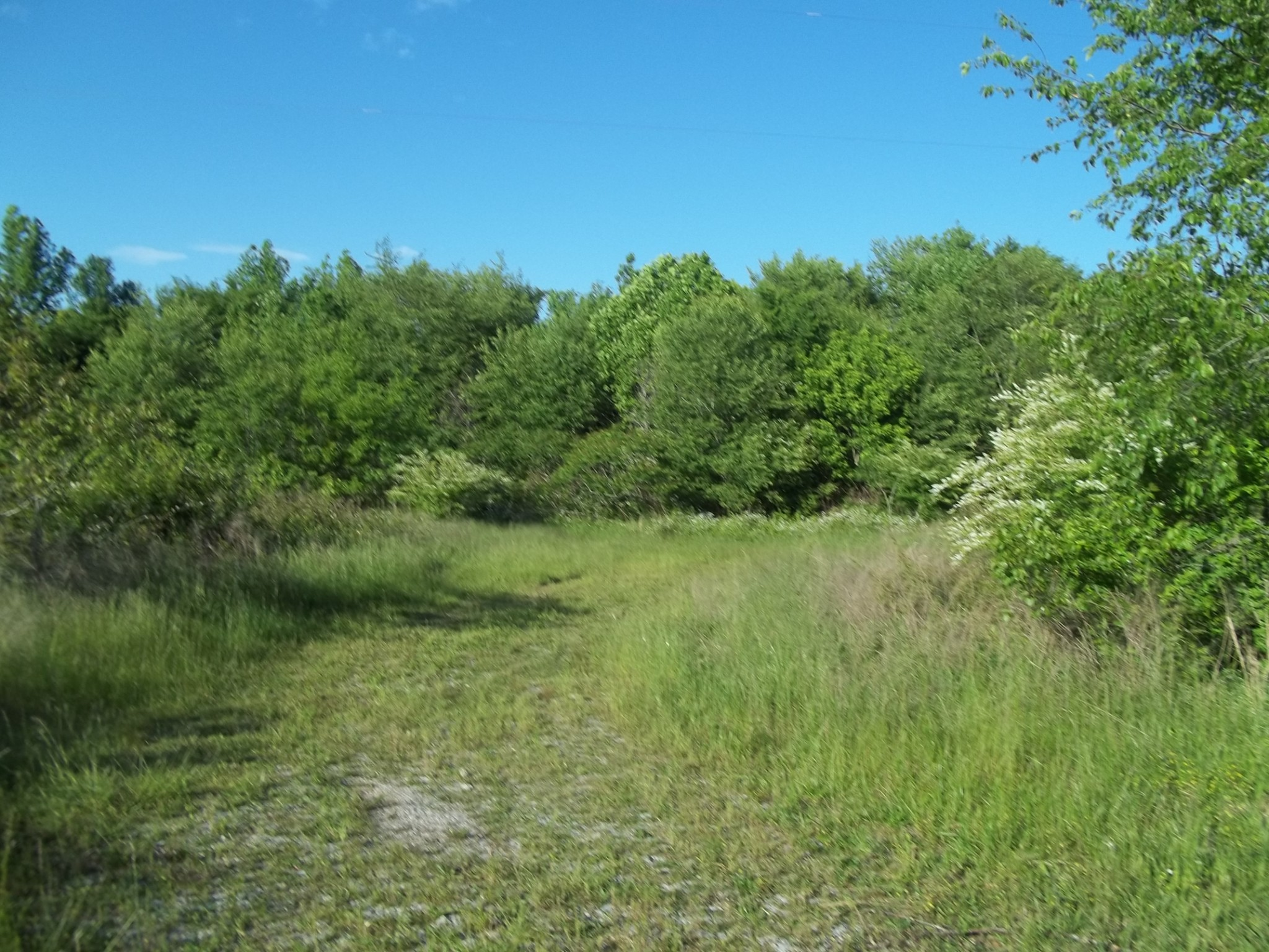 0 Cowhorn Hollow Rd. Property Photo
