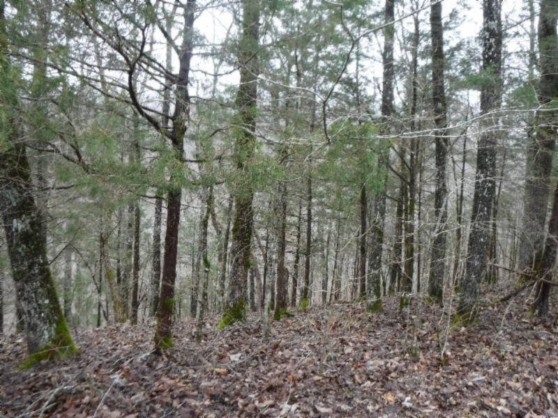 5 Backwoods Trails Lane Property Photo