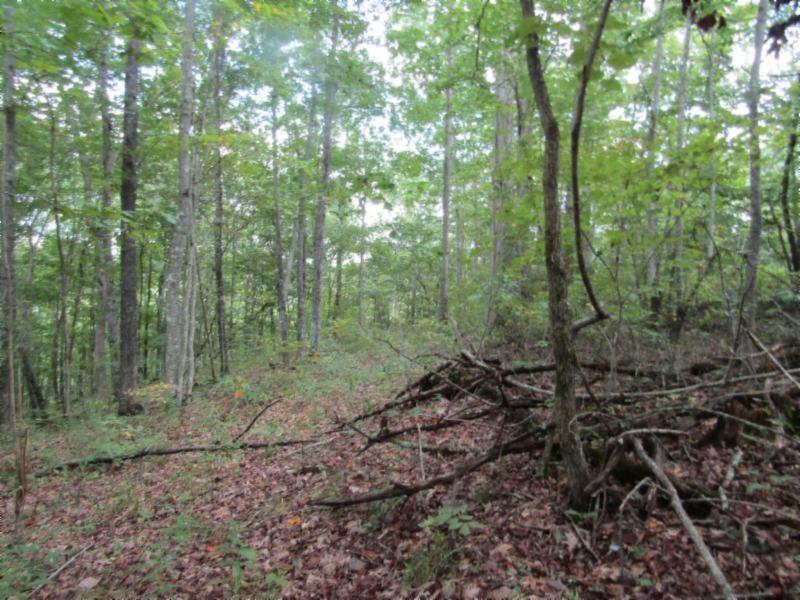 5 .017ac Backwoods Trl Property Photo