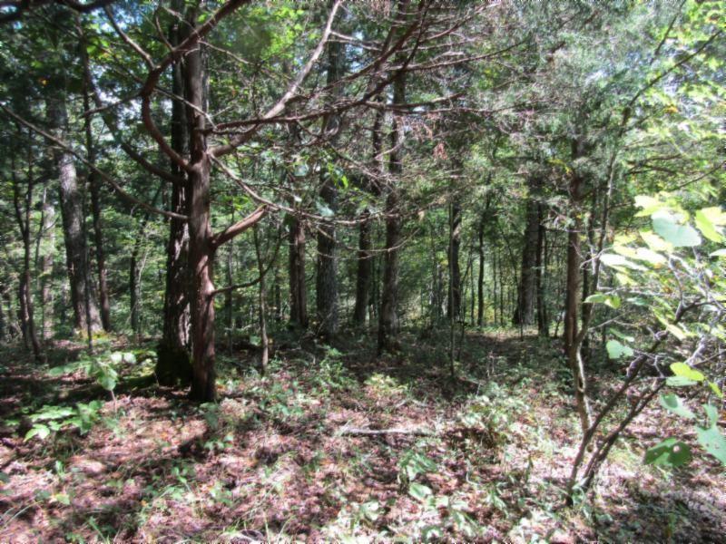 5 .015ac Backwoods Trails Property Photo