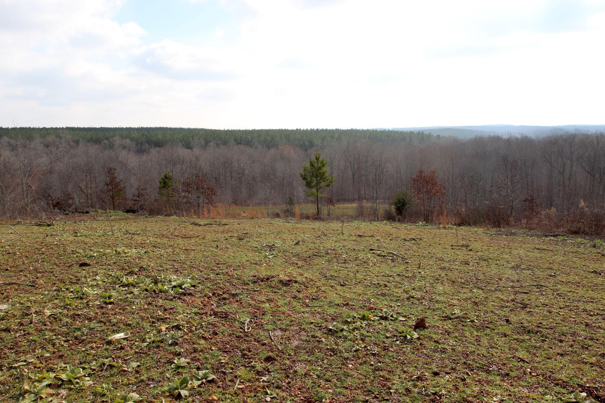 698 7 Mile Ridge Rd. Property Photo 25