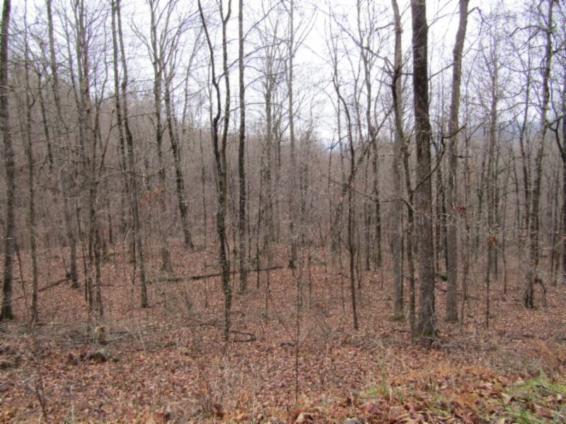 222 .42ac Holden Hollow Rd Property Photo