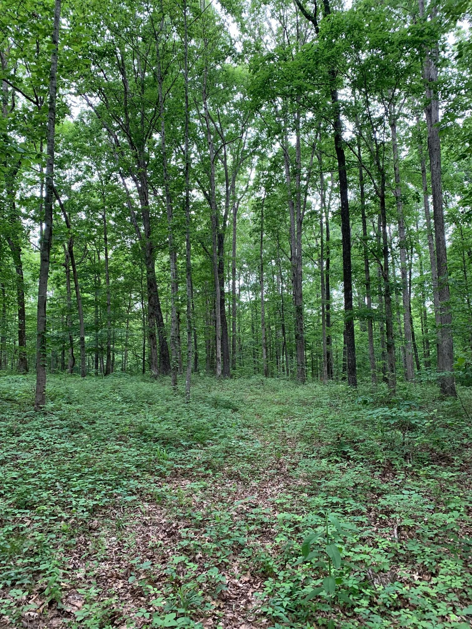0 Pinewood Rd Property Photo 12