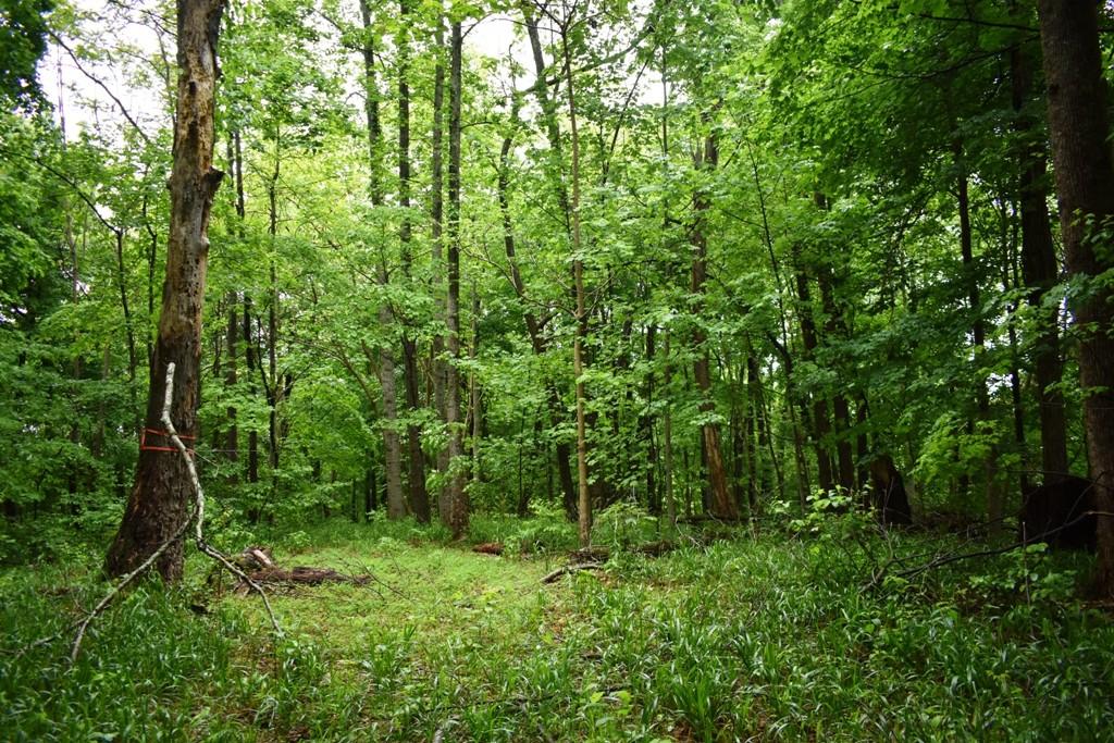 0 Mcbroom Branch Rd Property Photo