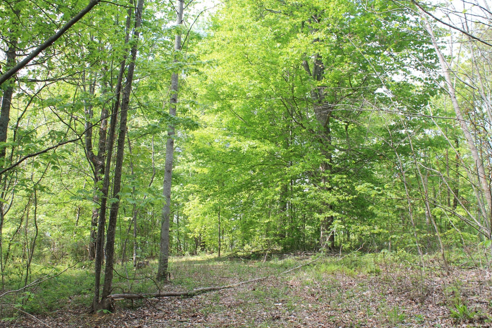0 Keeling Branch Hwy Property Photo