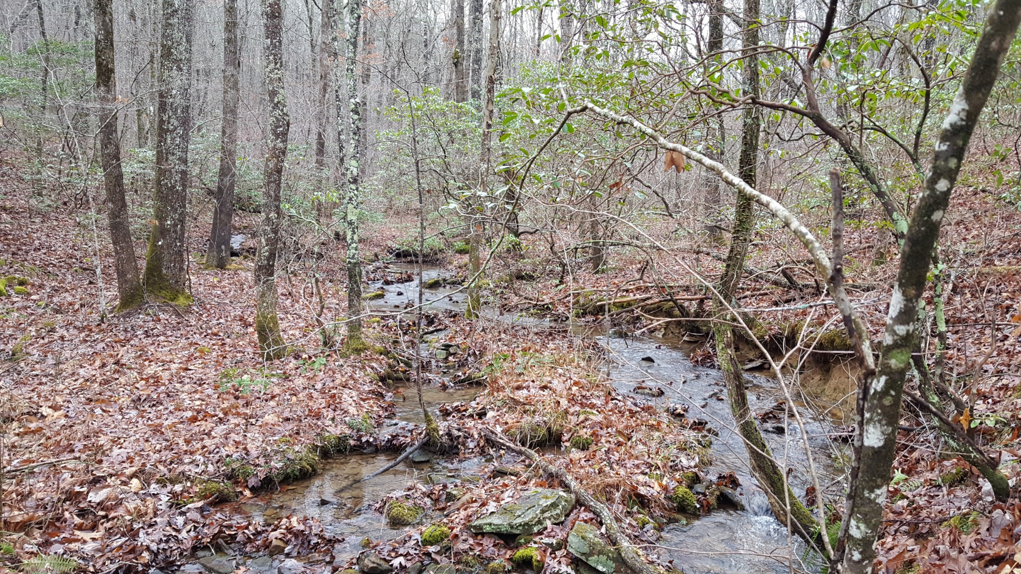 0 Mountain Creek Rd. Property Photo