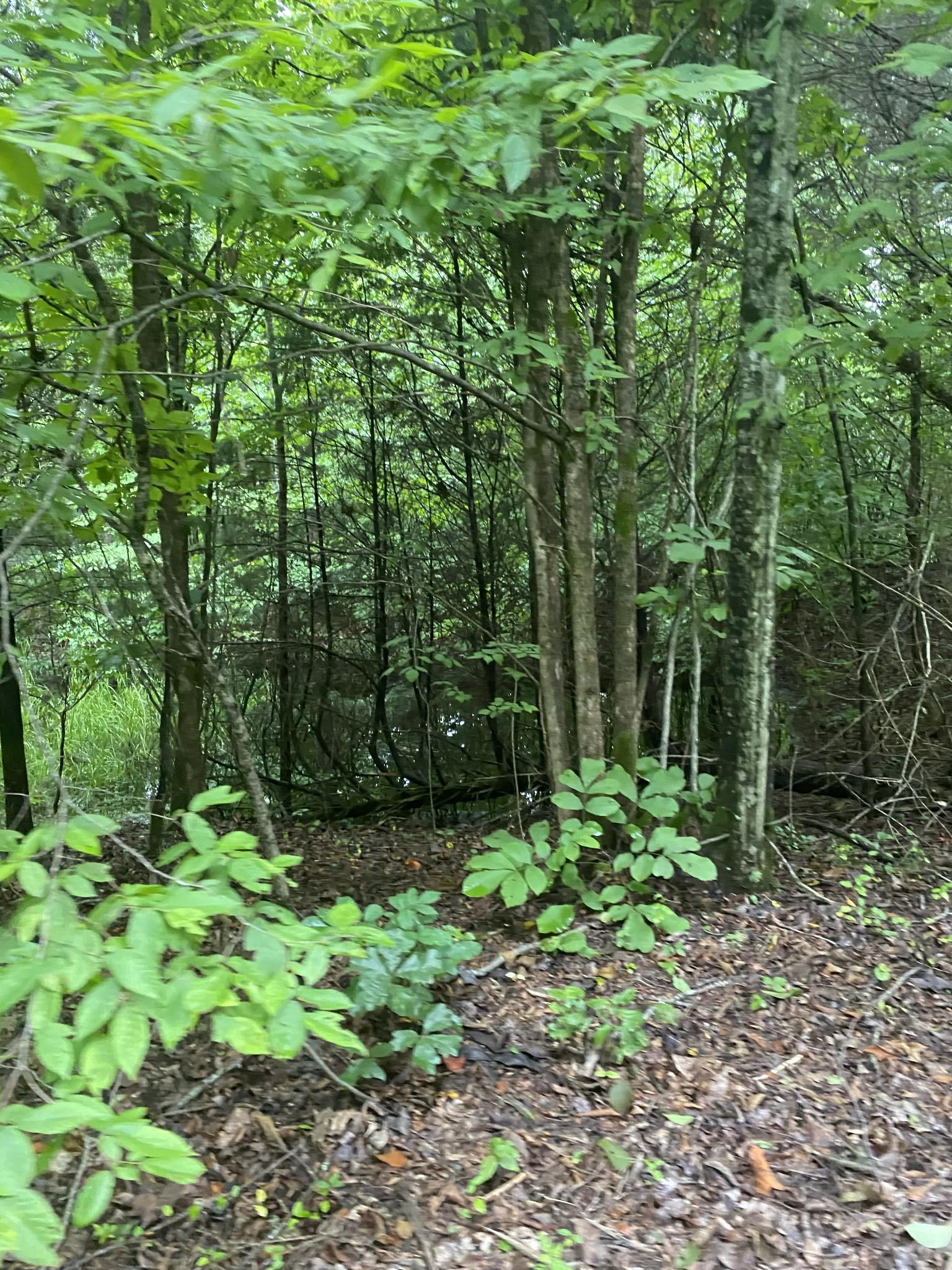 4563 Wayland Springs (tidwell H Property Photo