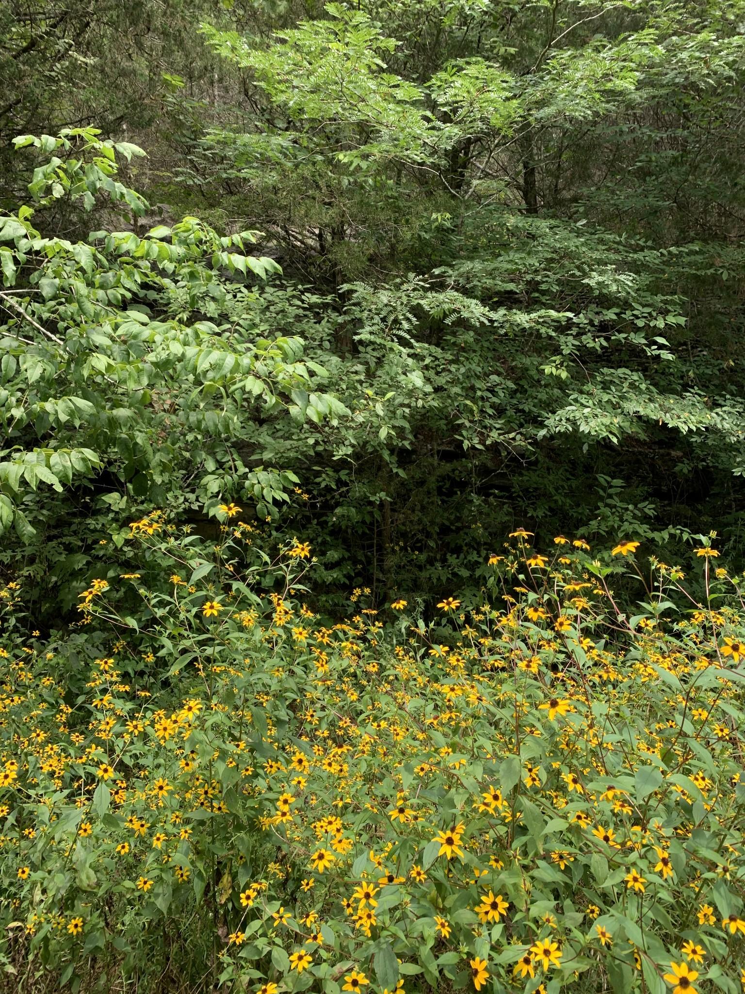271 Rivers Edge Ln Property Photo