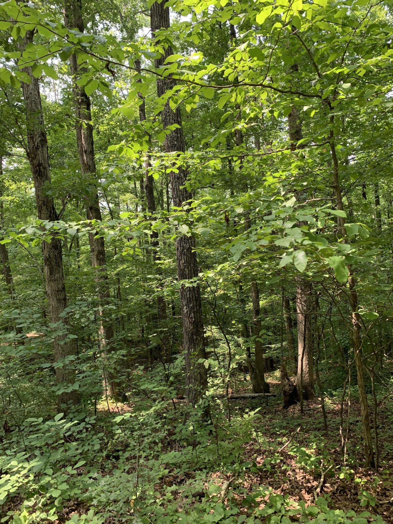 9177 Buttermilk Ridge Rd Property Photo 37