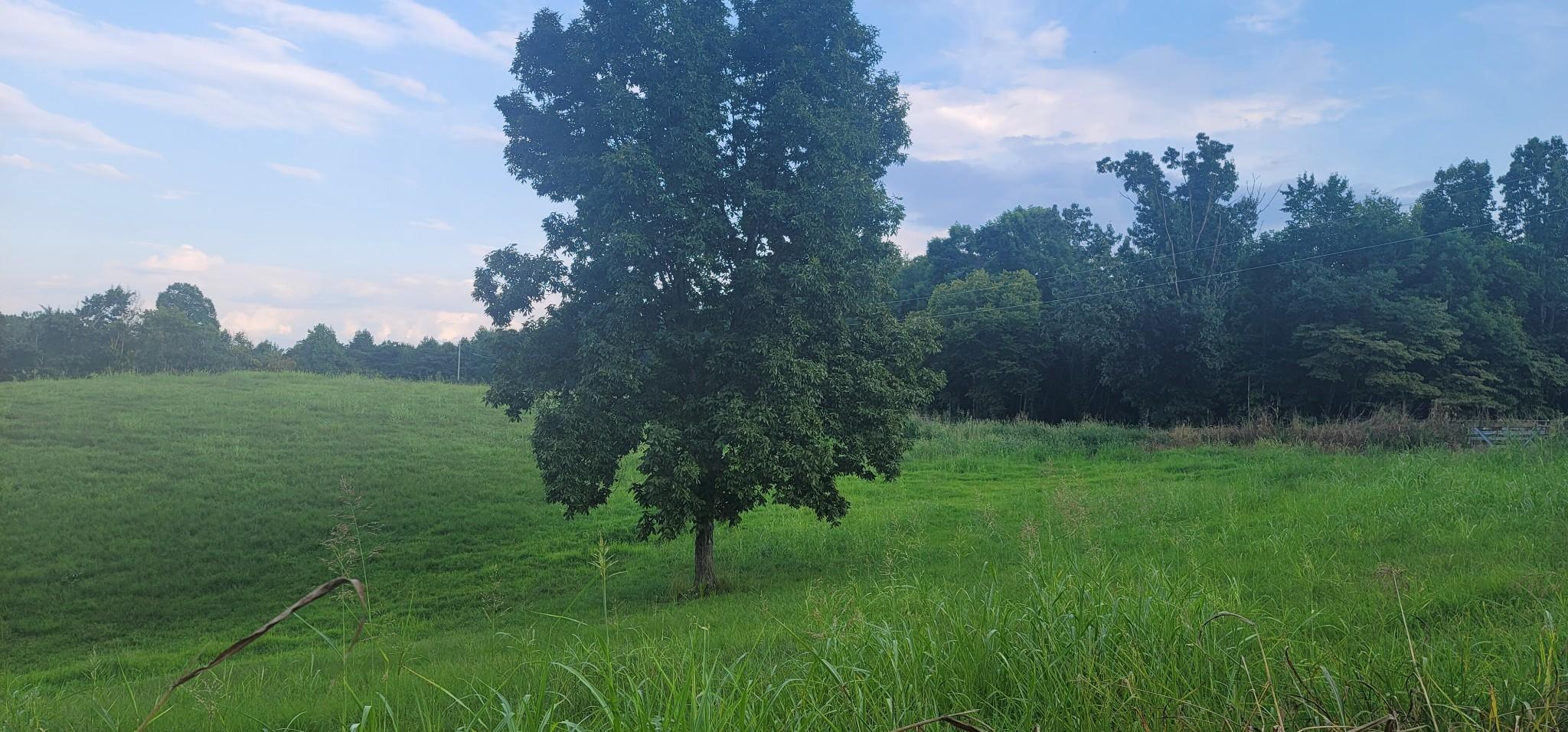 0 Clemons Ridge Rd Property Photo
