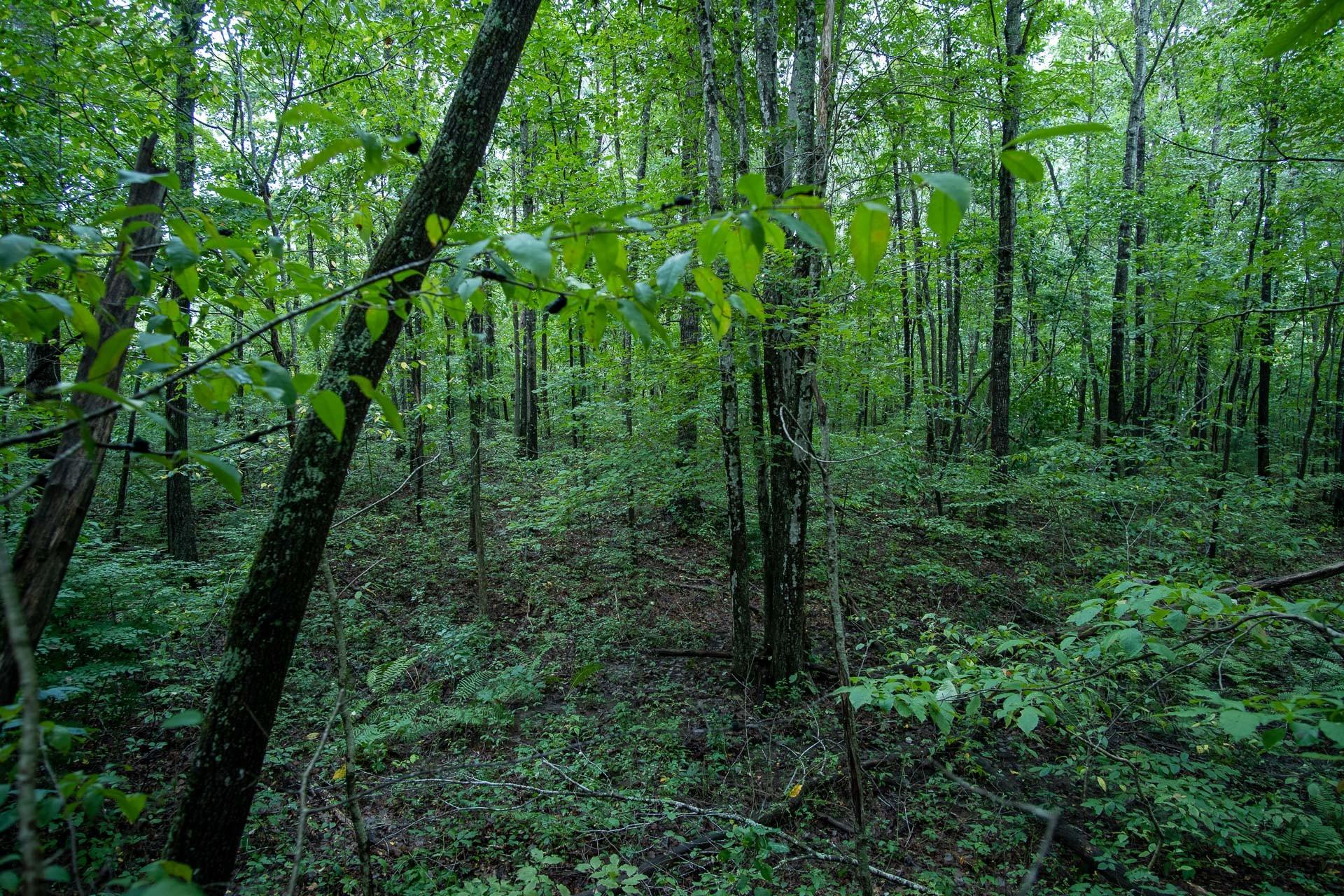 207 Saint George Dr Property Photo
