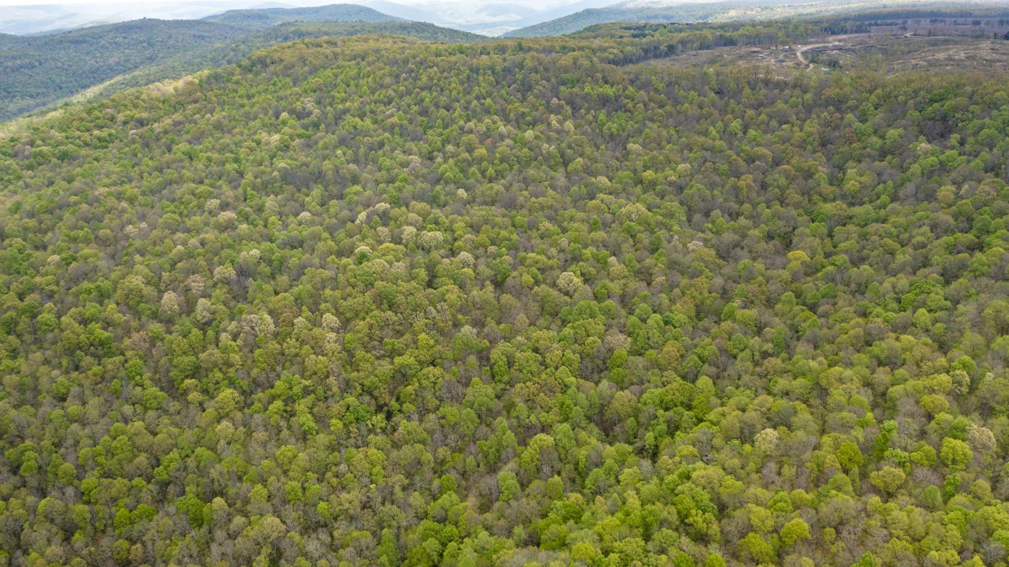0 Northcutts Cv Rd Property Photo
