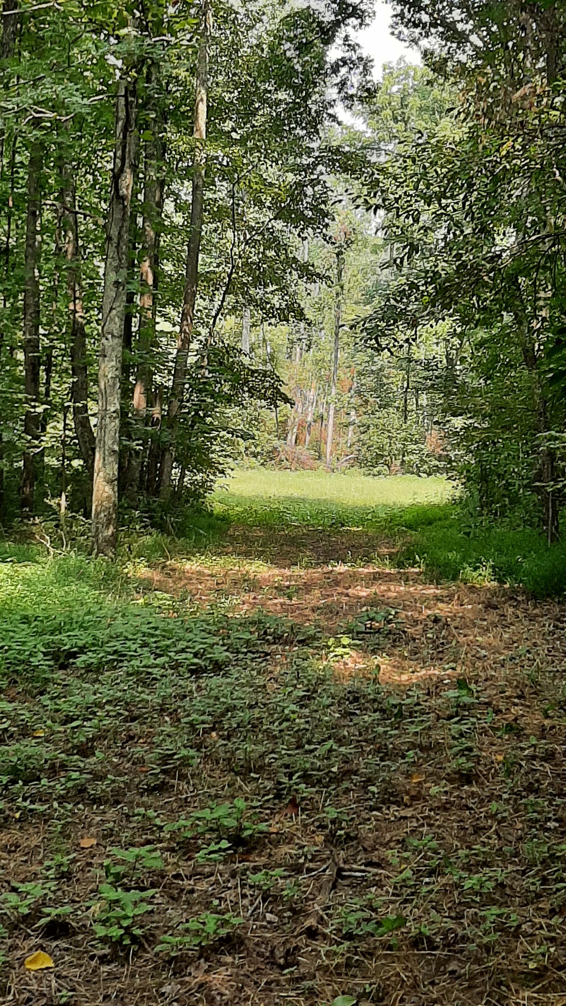 4079 Old Highway 13 Property Photo
