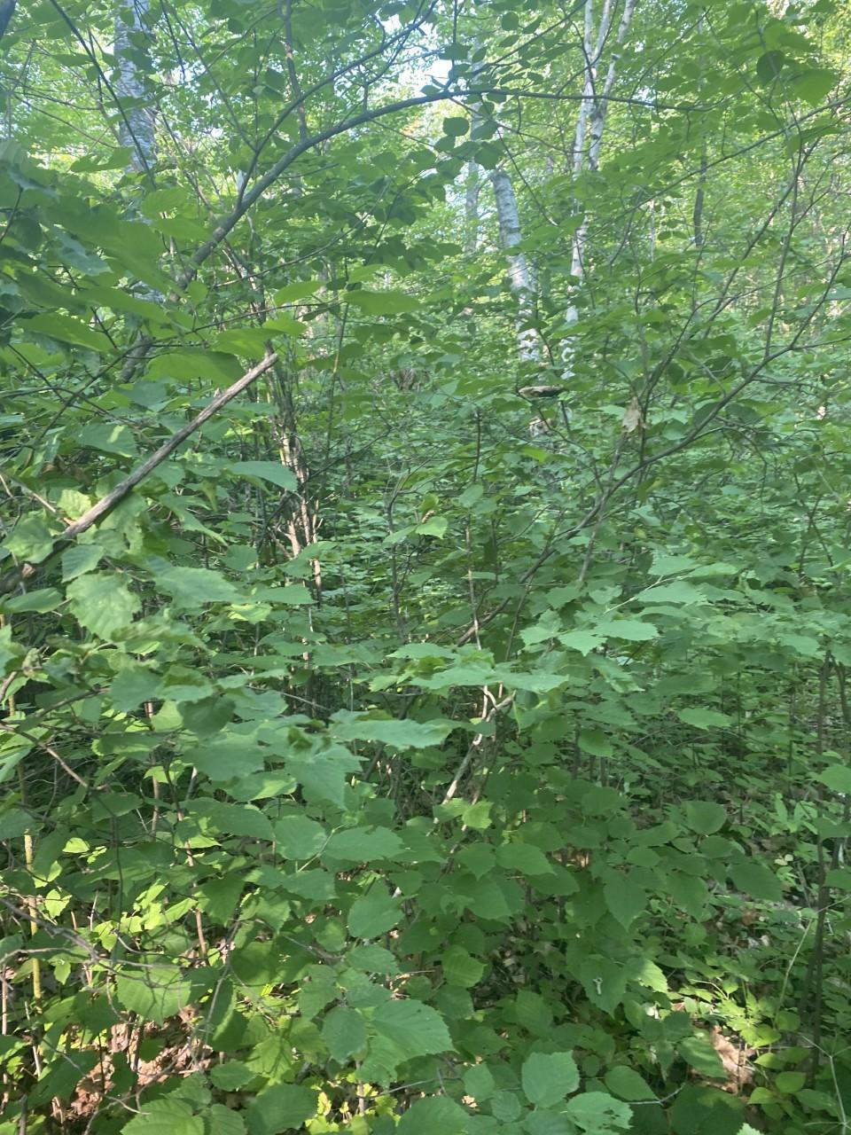 Tbd Woodchuck Trail Property Photo