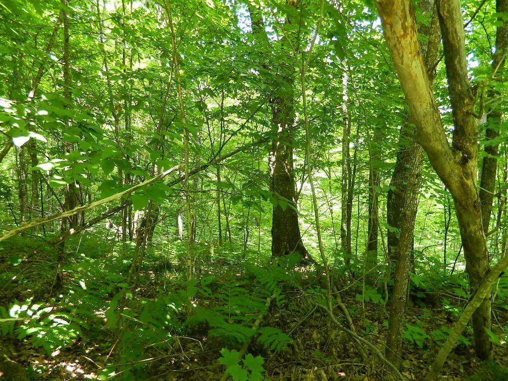 0 Scout Trail Property Photo