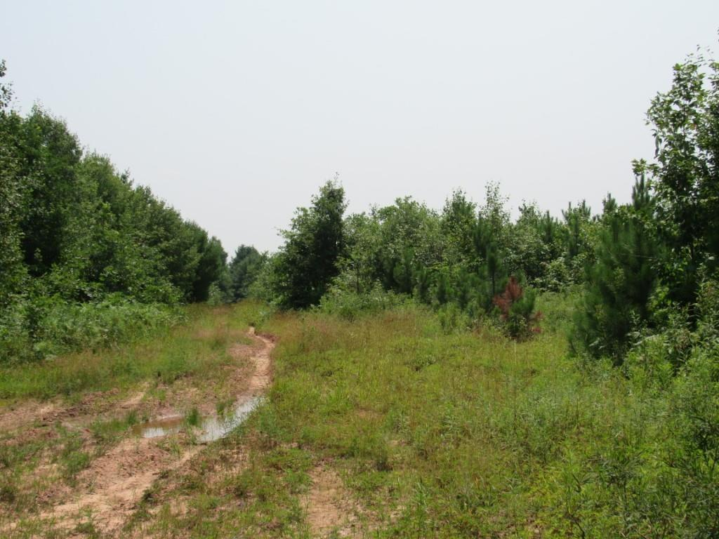 1a On Channey Road Property Photo 23