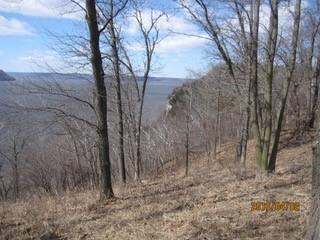 10.23 Acres West Bluff Road S. Property Photo 7