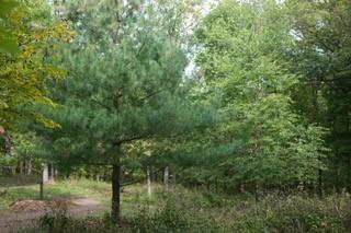 10.23 Acres West Bluff Road S. Property Photo 20