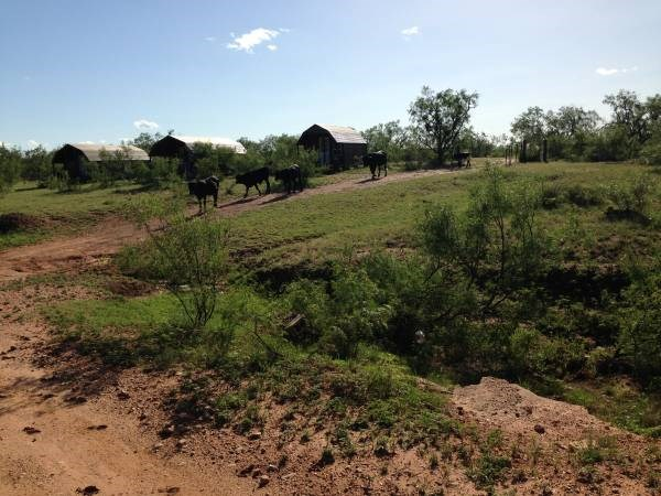 1286 Runnels County Road 287 Property Photo 5