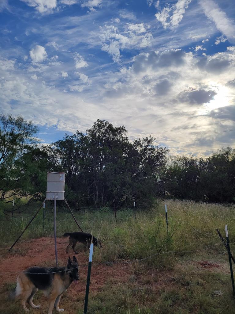 1734 Mule Creek Rd Property Photo 32