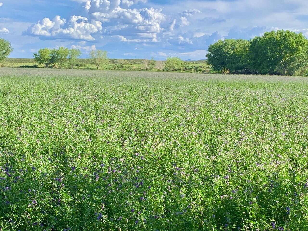 Lemitar Ranch & Farm Property Photo 4
