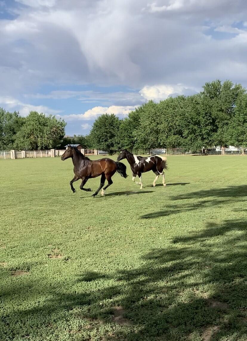 Lemitar Ranch & Farm Property Photo 5