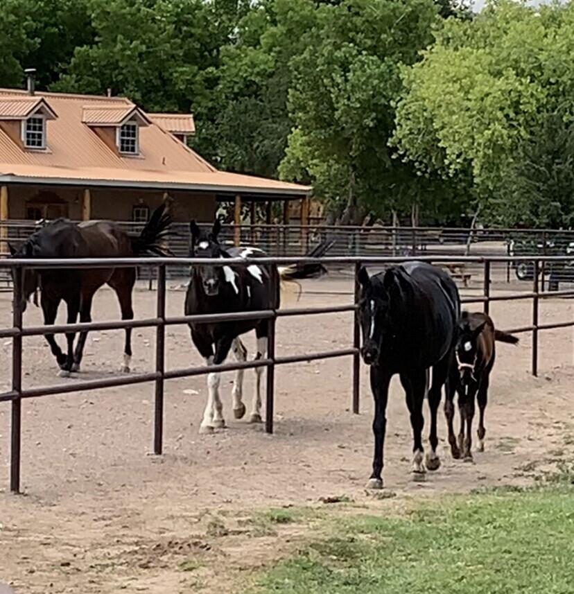 Lemitar Ranch & Farm Property Photo 19