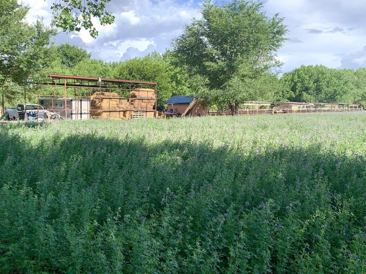 Lemitar Ranch & Farm Property Photo 58