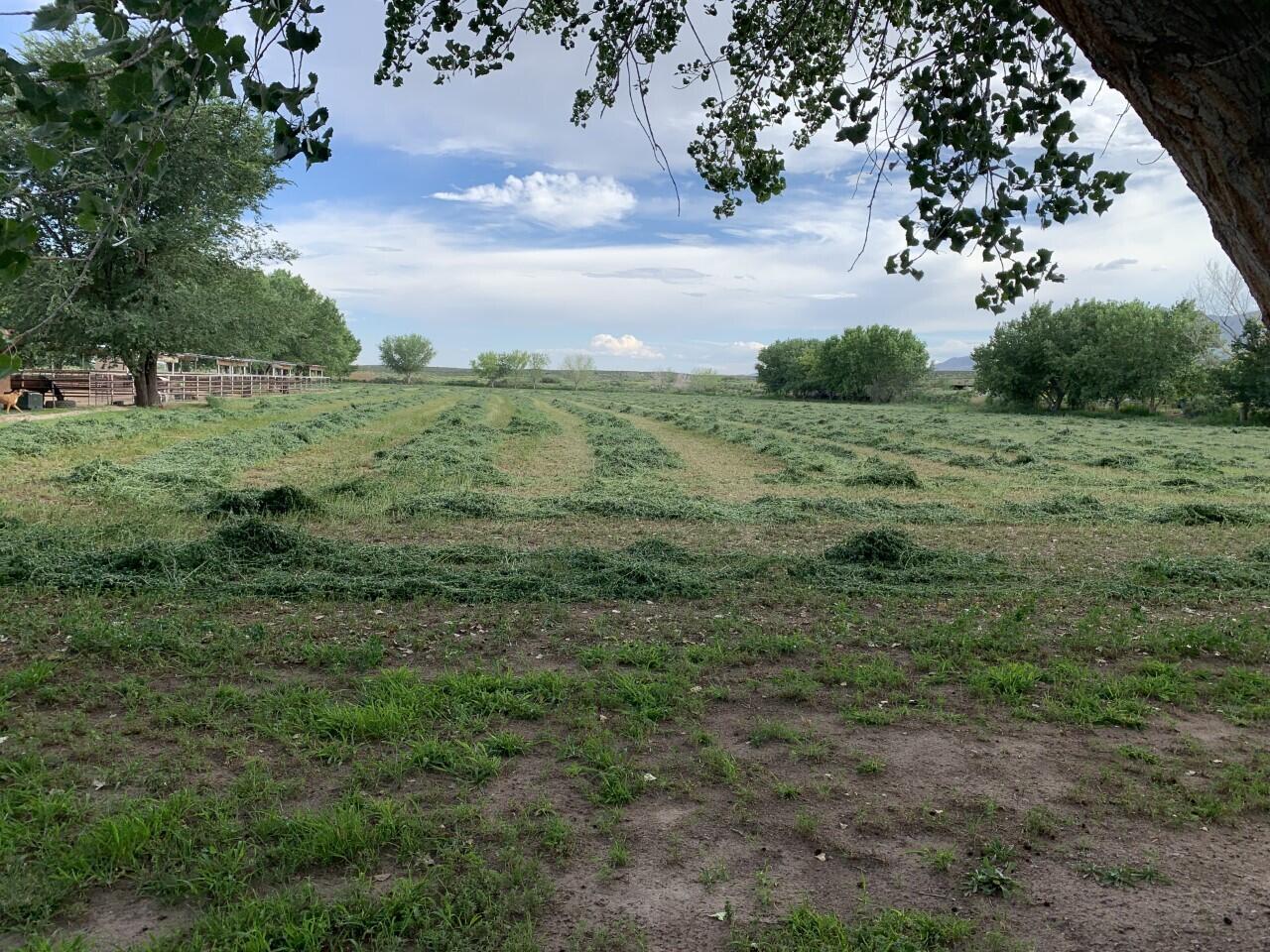 Lemitar Ranch & Farm Property Photo 59
