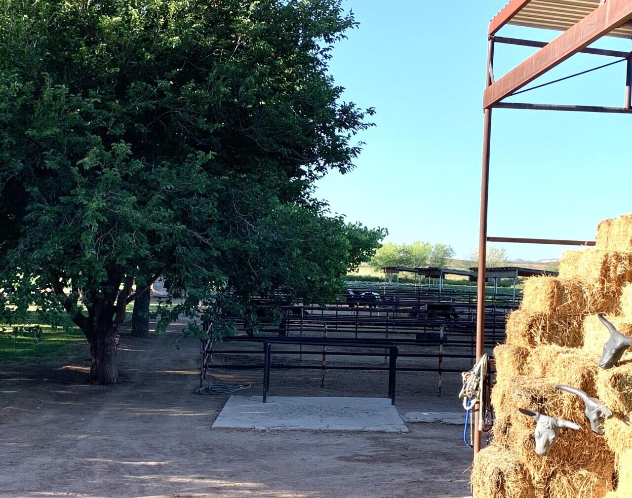 Lemitar Ranch & Farm Property Photo 65