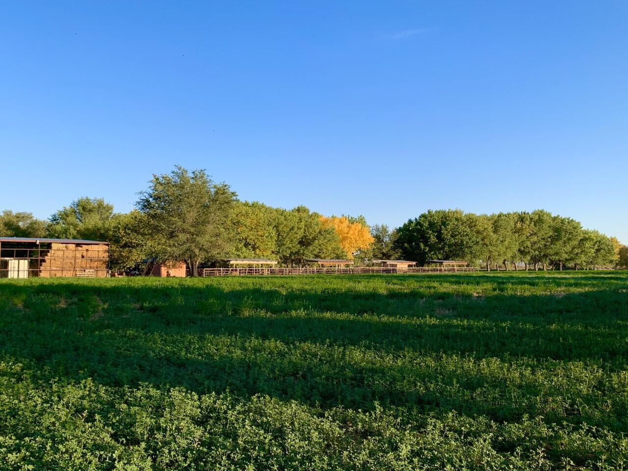 Lemitar Ranch & Farm Property Photo 83