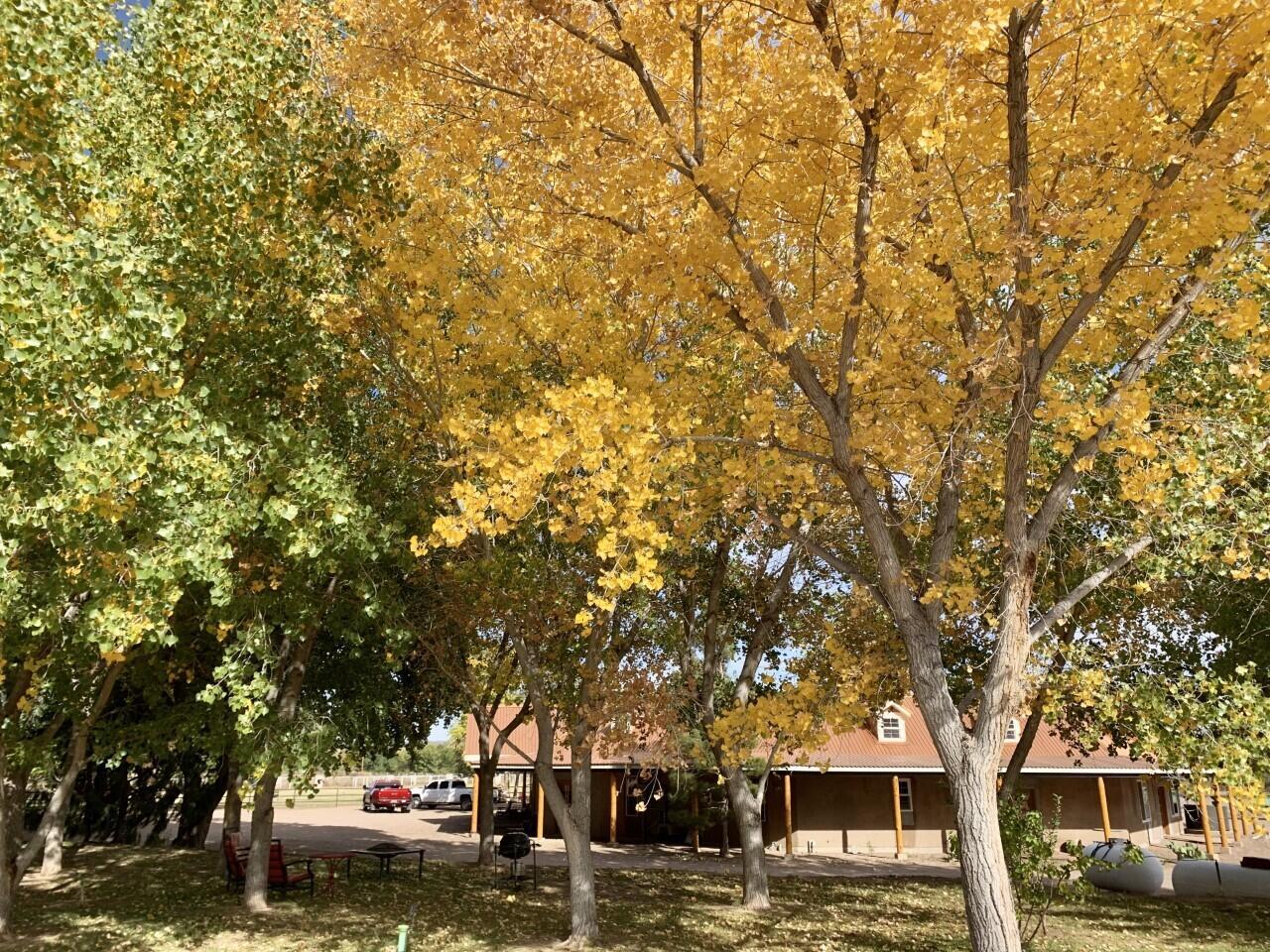 Lemitar Ranch & Farm Property Photo 84