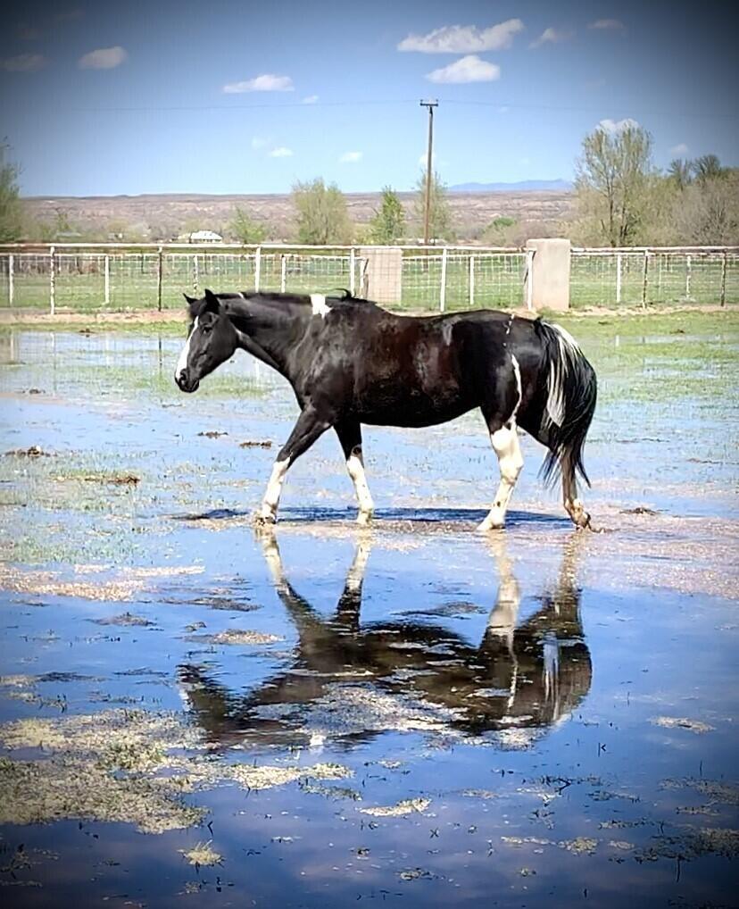 Lemitar Ranch & Farm Property Photo 88