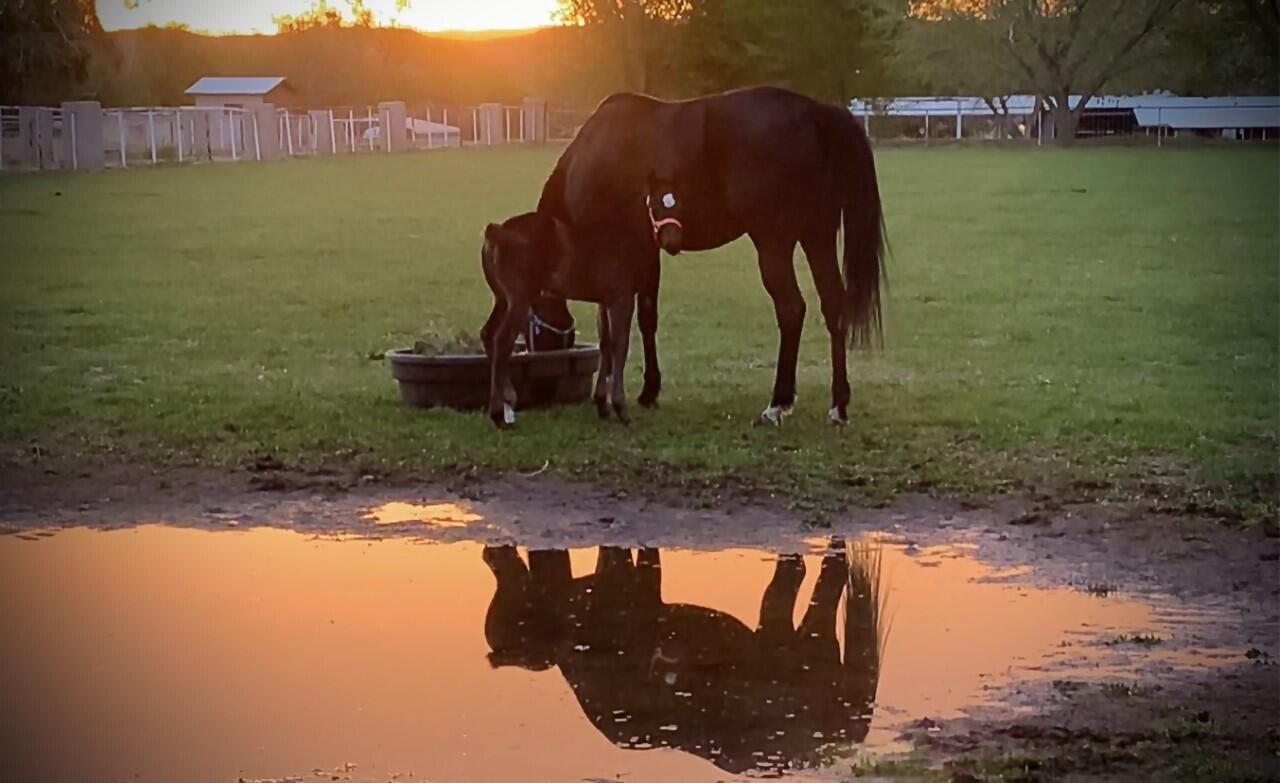 Lemitar Ranch & Farm Property Photo 89