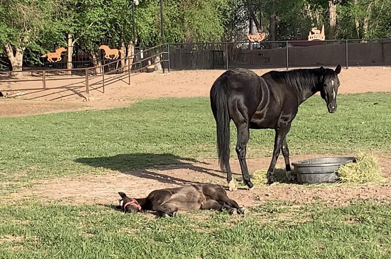Lemitar Ranch & Farm Property Photo 90