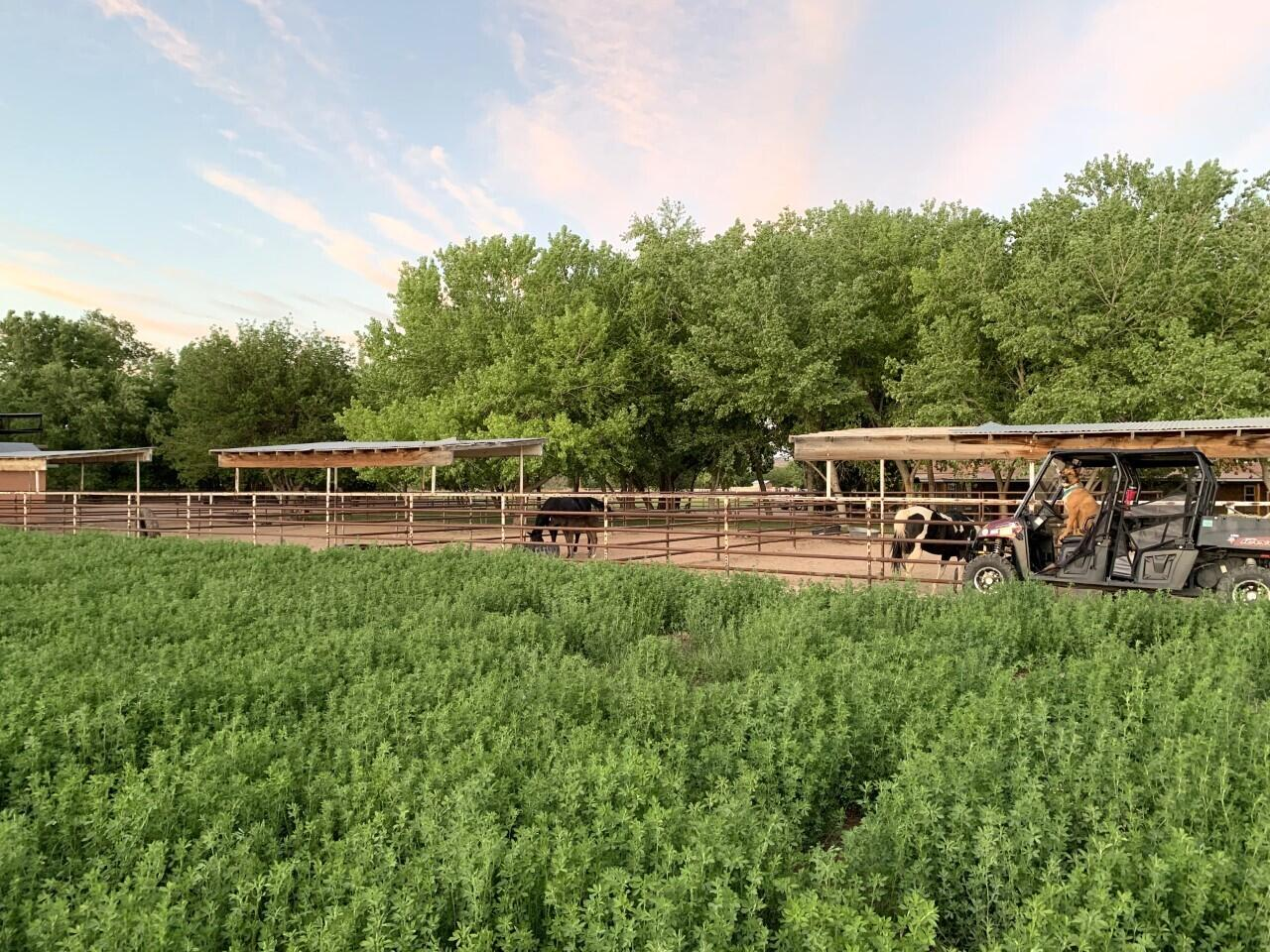 Lemitar Ranch & Farm Property Photo 91