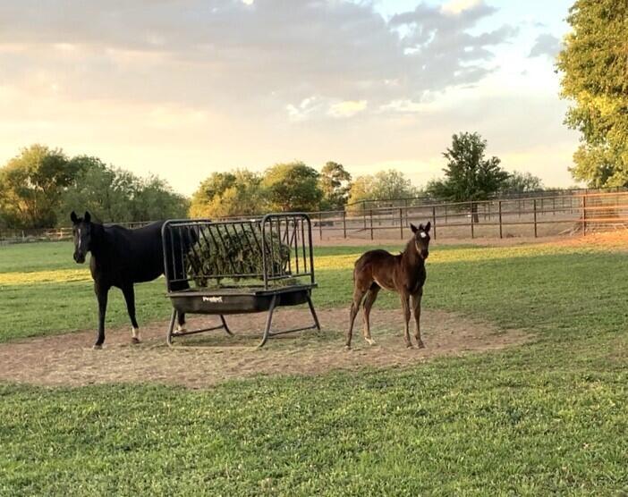 Lemitar Ranch & Farm Property Photo 92