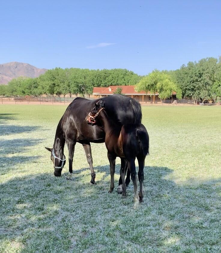Lemitar Ranch & Farm Property Photo 98